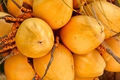 samla ihop kokosnöten Arkivfoto
