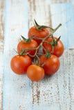 samla ihop tomater för Cherryred Arkivfoton