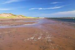 Samla musslor stranden Arkivbild