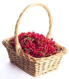 Samlade nya röda vinbär i en korg fotografering för bildbyråer