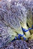 samlar ihop lavendelar Royaltyfria Foton