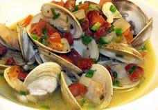 samlar musslor littleneck Fotografering för Bildbyråer