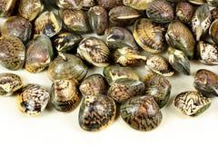 samlar musslor rått Royaltyfri Fotografi