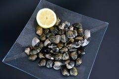 samlar musslor rått Arkivfoto