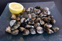 samlar musslor rått Arkivfoton