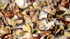 samlar musslor skaldjur lager videofilmer