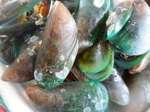 Samlar musslor thailändsk mat fotografering för bildbyråer