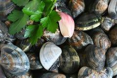 samlar musslor vitlökparsley Royaltyfria Bilder