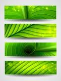 Samling av banertextur av den gröna leafen Royaltyfria Bilder
