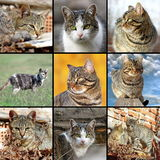 Samling av bilder med inhemska katter Royaltyfria Bilder