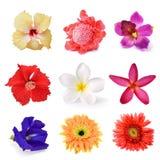 Samling av blomman Royaltyfri Foto