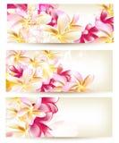 Samling av blommavektorbakgrunder Fotografering för Bildbyråer