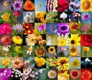 Samling av blommor Royaltyfri Fotografi
