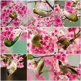 Samling av blommor och fågeln Arkivfoto