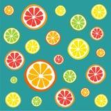 Samling av citrusa skivor Arkivfoton