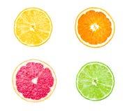 Samling av citrusskivor - apelsin, citron, limefrukt Fotografering för Bildbyråer