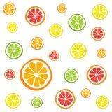 Samling av citrusskivor - apelsinen, citronen, limefrukt och grapefrukten, symboler ställde in Royaltyfri Bild