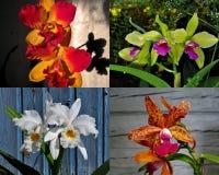 Samling av den exotiska orkidén arkivbild