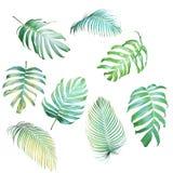 Samling av den palmblad- och Monstera philodendronen i ljus gre Arkivfoto