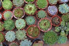 Samling av den sunda dekorativa suckulenta bästa sikten i växthusträdgården för stads- arbeta i trädgården design för inskränkt u arkivfoton