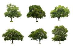 Samling av det härliga gröna trädet som isoleras på vit Arkivfoton