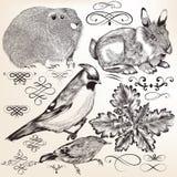 Samling av detaljerade beståndsdelar och djur för vektor royaltyfri illustrationer
