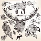 Samling av djur och krusidullar för vektor hand drog vektor illustrationer
