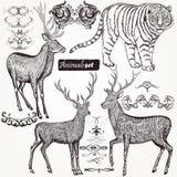 Samling av djur och krusidullar för vektor hand drog i vintag vektor illustrationer