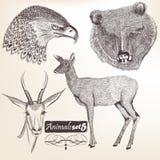 Samling av drog djur för vektor hand Royaltyfria Foton
