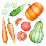 Samling av drog illustrationer för vattenfärg hand av grönsaker Arkivfoto