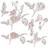 Samling av drog rosor för vektor hand för design royaltyfri illustrationer