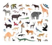 Samling av exotisk vilda djur som isoleras på vit bakgrund Packe av faunaart som bor i savannahen, djungel och royaltyfri illustrationer