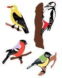 Samling av färgfåglar Arkivfoto