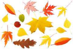 Samling av färgglada leaves Arkivbild