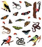 Samling av färgillustrationer av fåglar, fjärilar och amfibiskt Fotografering för Bildbyråer