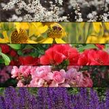Samling av färgrika blommabaner eller bakgrund Royaltyfri Foto
