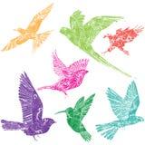 Samling av fåglar Royaltyfria Bilder