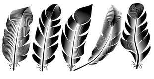 Samling av fjäderillustrationen, teckning, gravyr, färgpulver, linje konst vektor illustrationer