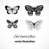 Samling av fjärilar som isoleras på vit bakgrund. Vektor I Royaltyfri Fotografi