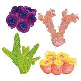 Samling av flottaväxter och koraller Färgrik hand dragen marin- flora Isolerad vektorillustration Arkivfoto