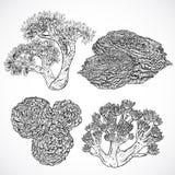 Samling av flottaväxter och koraller Tappninguppsättning av svartvit hand dragen marin- flora Royaltyfri Foto