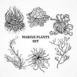 Samling av flottaväxter, sidor och havsväxt Arkivbild