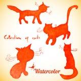 Samling av fyra katter Royaltyfri Foto