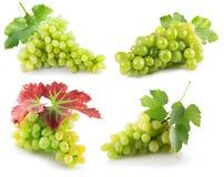 Samling av gröna druvor som isoleras på den vita bakgrunden Arkivbild