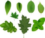 Samling av gröna leaves Arkivbilder