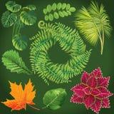 Samling av gröna leaves vektor royaltyfri illustrationer