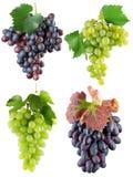 Samling av gröna och purpurfärgade druvor som tillbaka isoleras på viten Royaltyfri Bild