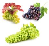 Samling av gröna och purpurfärgade druvor som tillbaka isoleras på viten Arkivbild