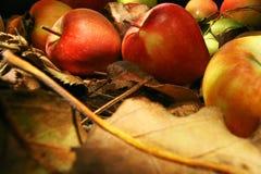 Samling av härliga äpplen Royaltyfri Bild
