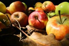 Samling av härliga äpplen Arkivbild
